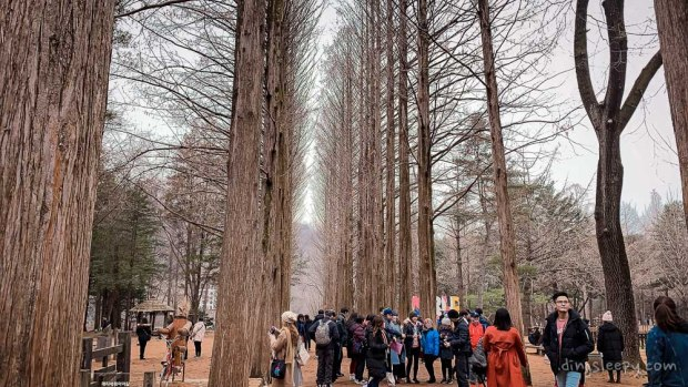 day trip from seoul nami island reality dingsleepy